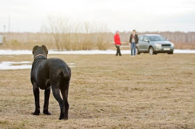 Un chien noir se tient dans le champ et regarde deux personnes au loin.