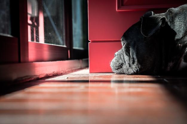 Un chien noir solitaire regarde par la fenêtre comme s'il attendait son propriétaire