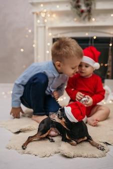 Un chien pinscher nain dans un chapeau de noël rouge se trouve sur un tapis de fourrure à côté d'enfants jouant