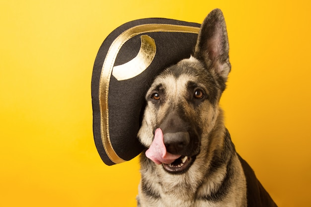 Chien pirate - berger d'europe de l'est habillé en pirate