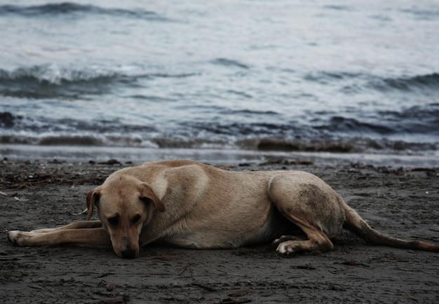 Chien sur la plage, heure d'été
