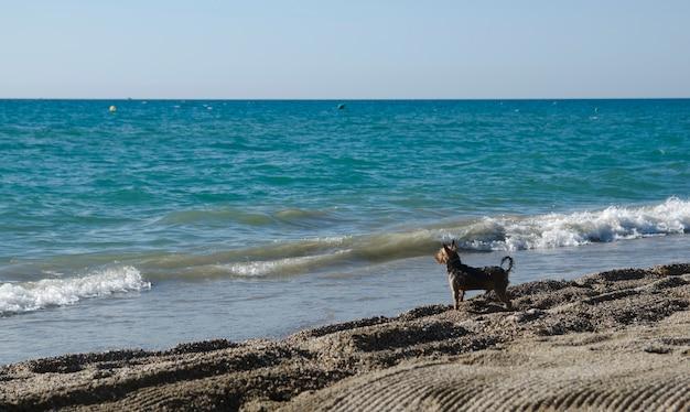 Un chien à la plage en regardant la mer