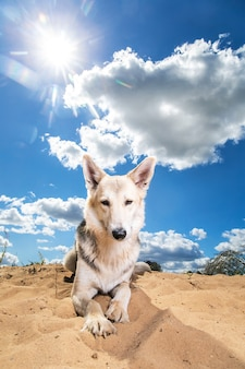 Chien poilu contre ciel nuageux. journée ensoleillée
