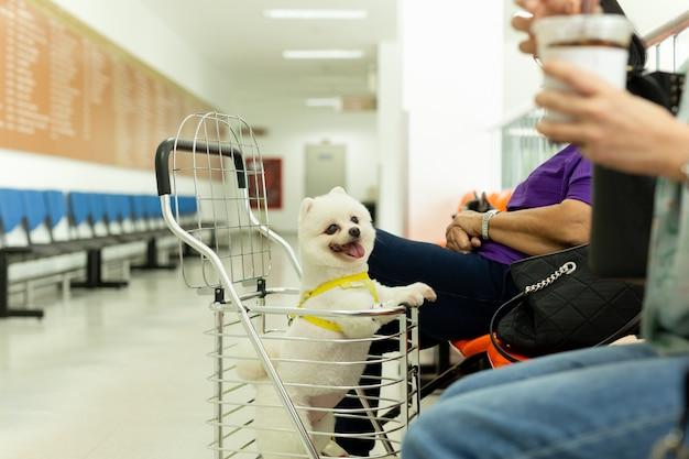 Chien de poméranie assis dans un chariot pour chien