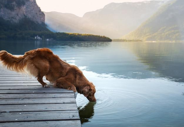 Chien sur un pont en bois