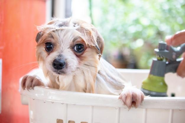Chien prend un bain