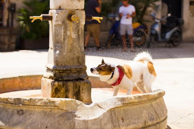 Un chien profite de l'occasion pour boire un verre de la fontaine de la rue