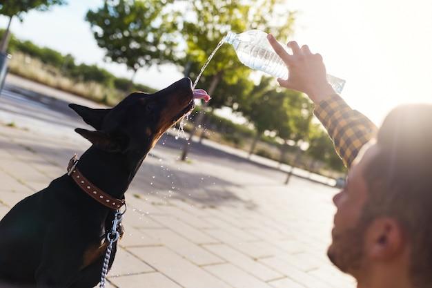 Chien qui boit de l'eau de la bouteille en plastique dans le parc.