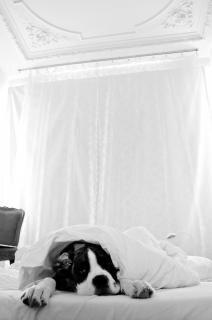 Chien qui dort dans son lit