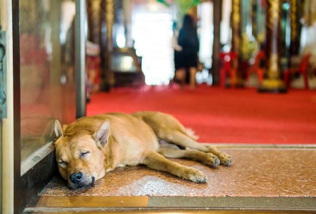 Le chien qui dort jette des allées.