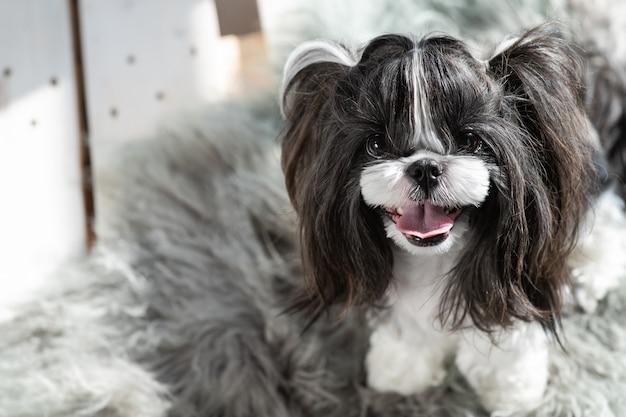 Le chien regarde droit avec un sourire