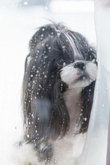Un chien regarde la pluie par la fenêtre