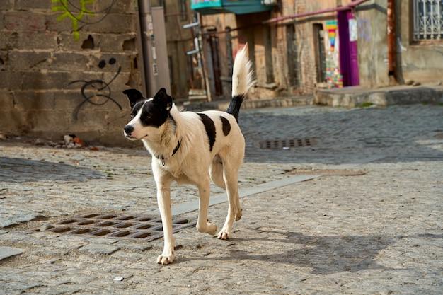 Chien sans-abri dans la rue du vieux tbilissi.
