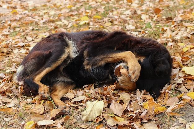 Le chien sans-abri est timide