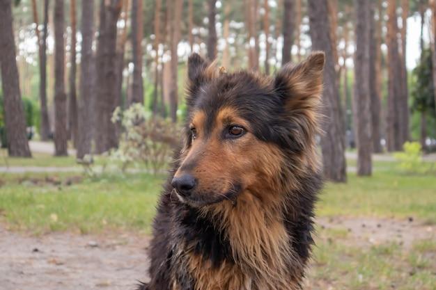 Un chien sans-abri mignon avec des yeux mignons dans un parc d'été. notion d'adoption. chien sans-abri triste posant dans le parc.
