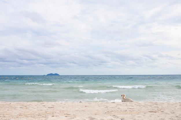 Chien se détend sur la plage de sable