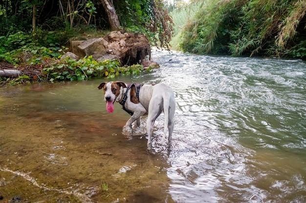 Un chien se rafraîchit dans un ruisseau pour atténuer la chaleur intense.