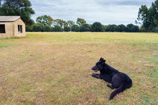 Chien se reposant dans un grand jardin avec de l'herbe et des arbres