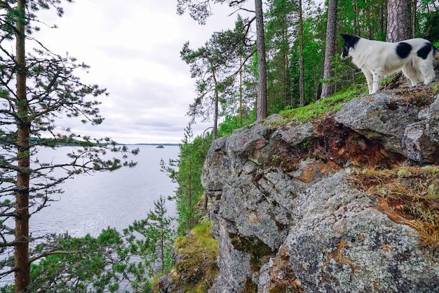 Le chien se tient sur le bord de la montagne au bord du lac