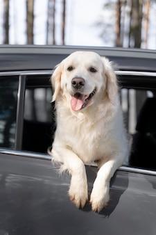 Chien souriant à faible angle en voiture