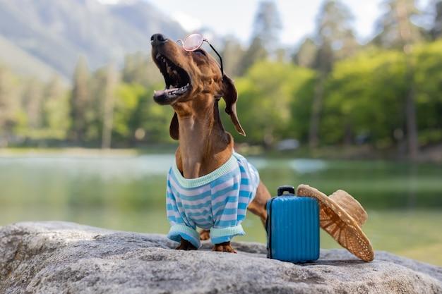 Chien teckel mignon en voyage. un chien teckel portant des lunettes de soleil, un chapeau de paille et des vêtements d'été est assis près de l'eau avec une valise sur la mer. vacances avec animaux. photo de haute qualité