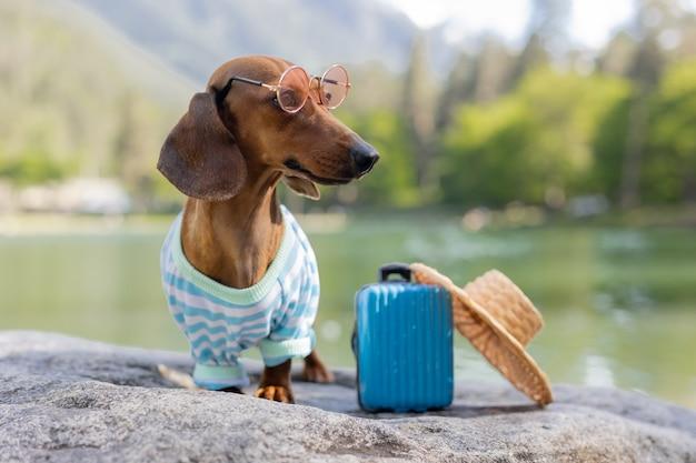 Chien teckel mignon en voyage. un chien teckel portant des lunettes de soleil, un chapeau de paille et des vêtements d'été est assis près de l'eau avec une valise. vacances avec animaux. photo de haute qualité
