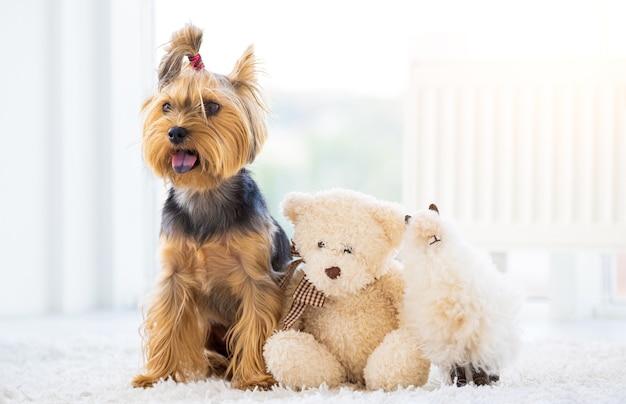Chien terrier domestique et jouets en peluche dans une pièce lumineuse