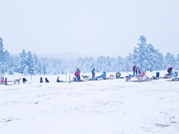Chien traîneau course hiver norvège neige