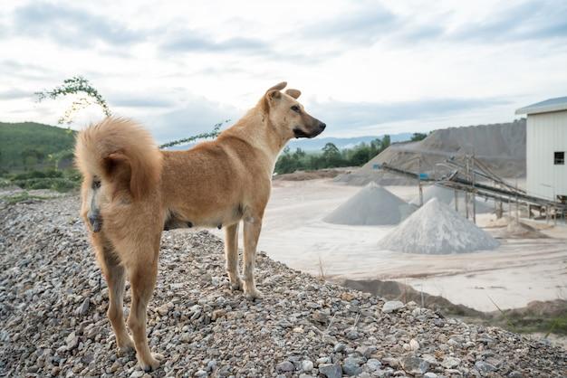 Un chien d'usine en béton