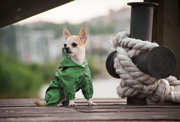 Un chien en vêtements élégants d'automne sur une promenade.