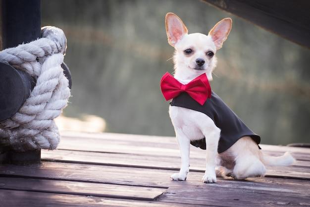 Un chien vêtu à la mode.