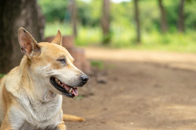 Les chiens attendent le propriétaire.