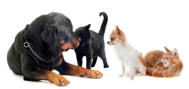 Chiens et chat