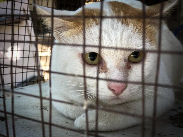 Chiens et chats neutralisants lors de la journée mondiale de la rage, stérilisation chirurgicale des chiens et des chats