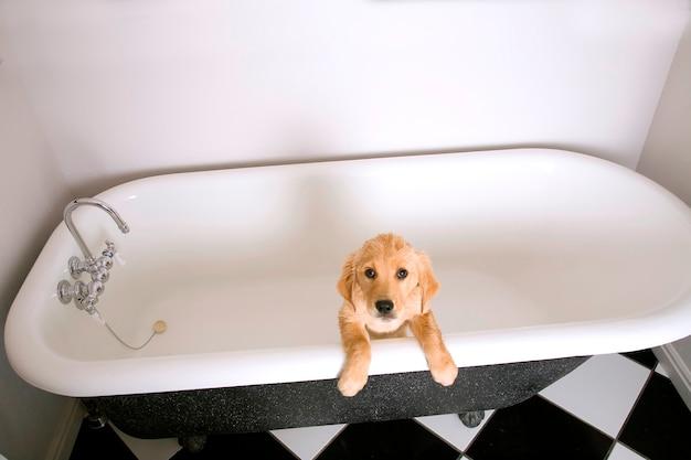 Chiens dans la baignoire