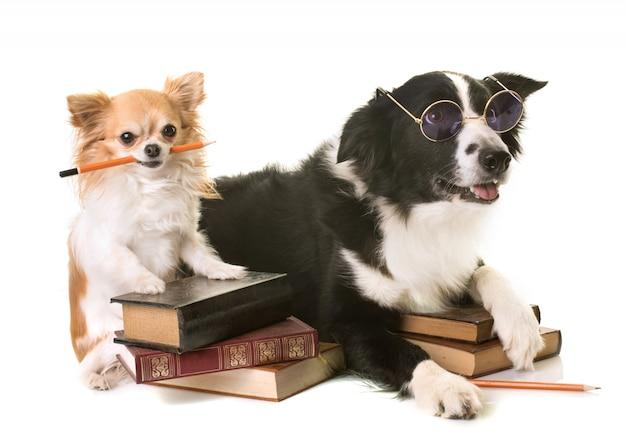 Les chiens à l'école