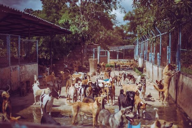 Chiens errants. des chiens errants sans abri abandonnés sont couchés dans les fondations.