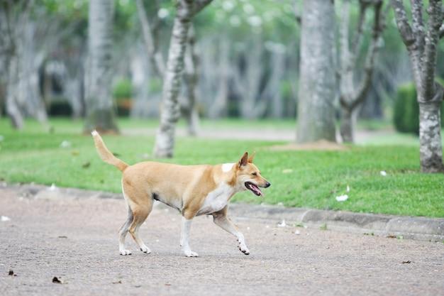Les chiens marchent en exercice dans le jardin