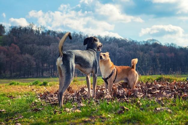 Les chiens se rencontrent dans le parc
