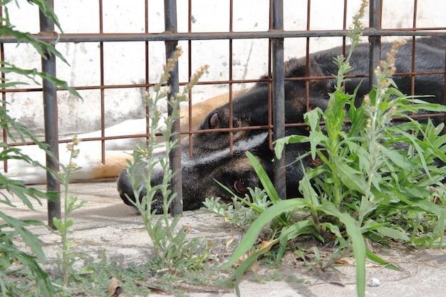 Les chiens victimes de la maltraitance des animaux