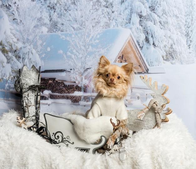 Chihuahua assis en traîneau contre scène d'hiver