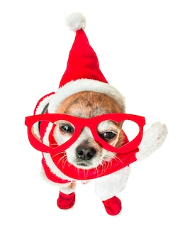Chihuahua de chien mignon en costume de père noël avec des lunettes rouges sur les yeux blanc isolé.
