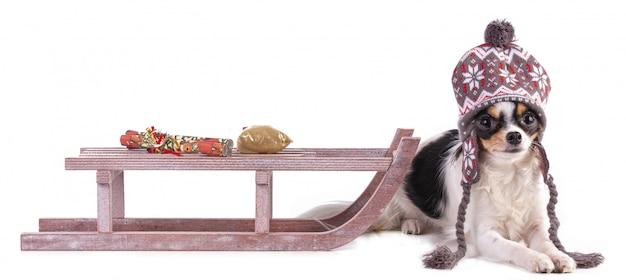 Chihuahua couché avec un chapeau et un traîneau pour noël