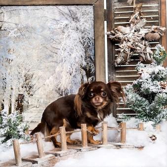 Chihuahua debout sur un pont dans un paysage d'hiver effrayant