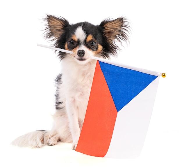 Chihuahua avec un drapeau de la république tchèque sur l'espace blanc