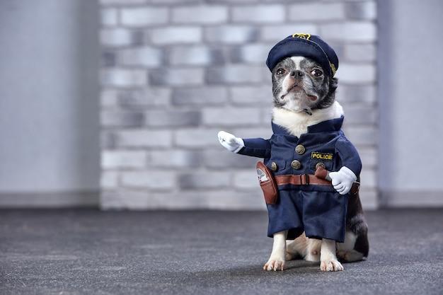 Chihuahua drôle en costume de policier.