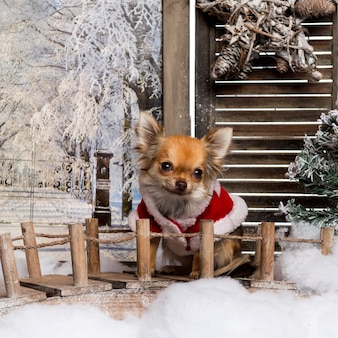 Chihuahua portant une cape de noël dans un paysage d'hiver