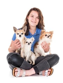 Chihuahuas, propriétaire et obéissance