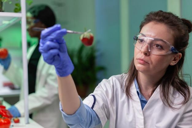 Chimiste scientifique vérifiant la fraise à l'aide d'une pince à épiler médicale travaillant dans un laboratoire de biotechnologie
