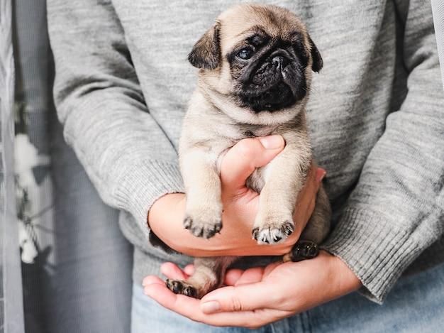 Chiot adorable. concept de soins pour animaux de compagnie